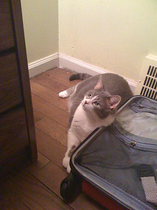 Tiki cat - this is Martha's fur baby.  She was sitting next to my suitcase checking things out.