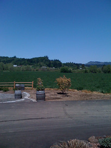Laurelhurst winery