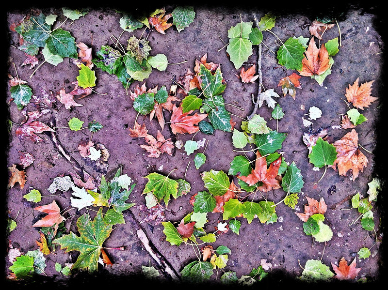 Fall leaves at Imam Ota, Hojiabad, Andijon Region