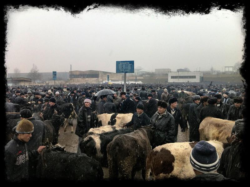 Cattle market at Namangan, Andijon Region, Uzbekistan