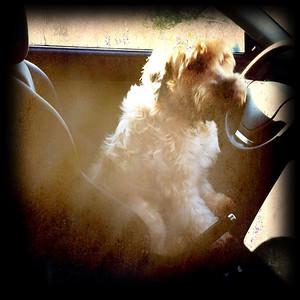 ~ Behind the Wheel ~