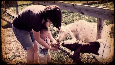 ~ Goat Call ~  Bowman Apple Orchards September 2012