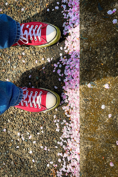 Blossoms and Chucks