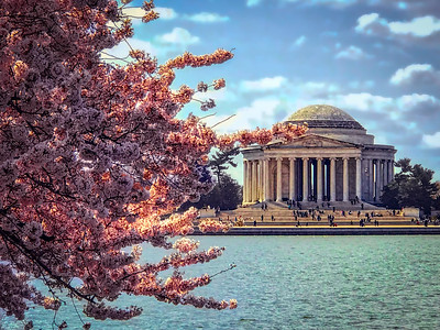 Blossoms at the Jefferson