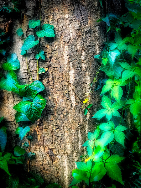 Bark and Vines