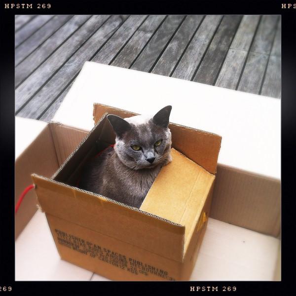 Pinot in a cardboard box. Jan 2012.