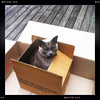 Pinot in a cardboard box. Jan 2012.