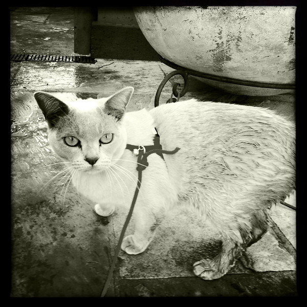 Sushi after she fell into the fish pond. 2011.