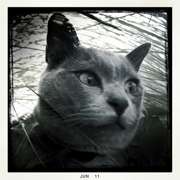 Pinot at home in our garden. Moonee Ponds, 2011.