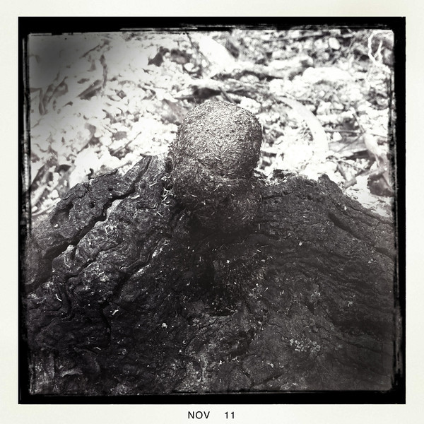 Wombat poo on burnt timber. Lerderderg State Park, Vic. Oct 2011.
