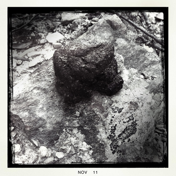 Wombat poo on sandstone. Lerderderg State Park, Vic. Oct 2011.