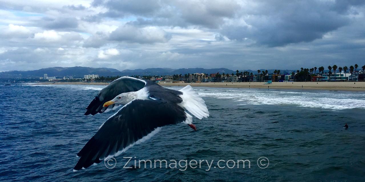 Airborne over Venice Beach