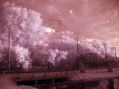 Infrared photo in  Garland, Texas