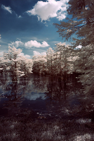Caddo Lake IR 2010