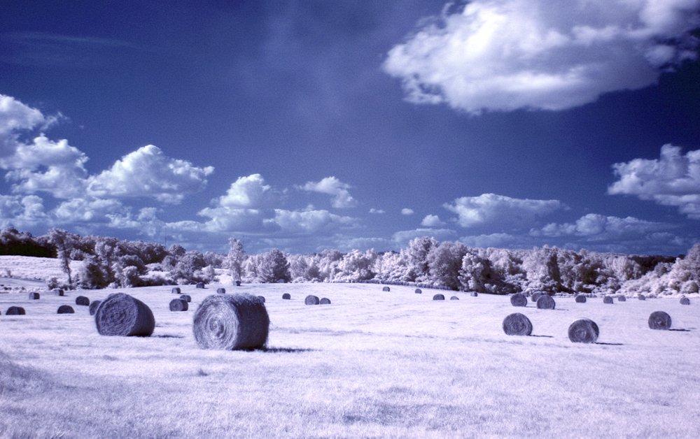 A little Infrared fun...