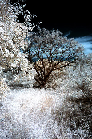 The Back Pasture......IR
