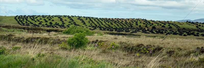 PEAT, STACKED FOR DRYING. BOGS COVER MUCH OF IRELAND