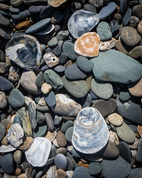 STONES AND SHELLS,  BEACH NEAR ARKLOW