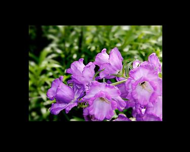 JackieSettipani purple flower2b 2015