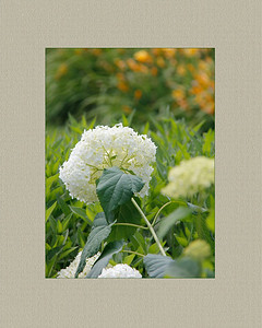 JackieSettipani  flower3 2015