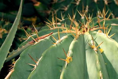 JackieSettipani cactus3v2 3849
