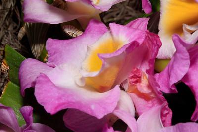 JackieSettipani Pink2 3789