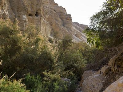Plants growing on rock, En Gedi Nature Reserve, Judean Desert, Dead Sea Region, Israel