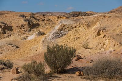 Bushes in desert, Kholot Tsivoniyim, Negev Desert, Israel