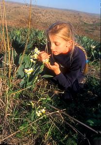 Flora of Israel נרקיס מצוי  Narcissus tazetta