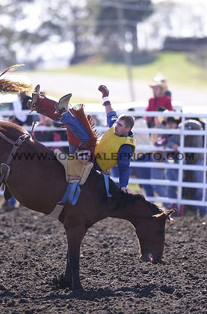 Josh Hale/Iowa State Daily<br /> Darin Peterson of South Dakota State University swings around backwards on the horse during the bareback bronc competition during Saturday afternoon's session of the 2000 Cyclone Stampede held at the ISU rodeo areana.  (10-14-00)