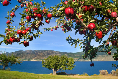 apples in paradise