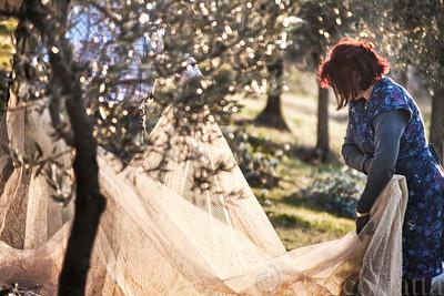 9) Il velo di sposa Oliva. Al tramonto.