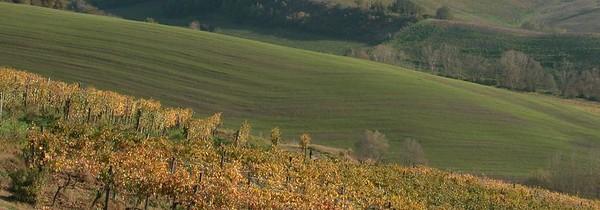 Italy (msc.)