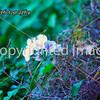 ITALY_7683 copy