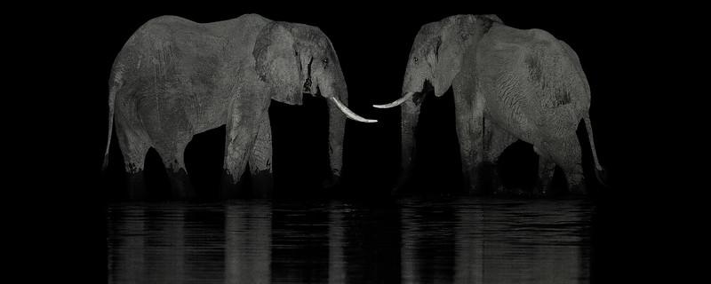 Two Elephants-header