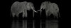 Two Elephants-header