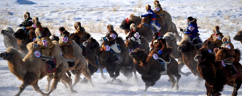 MongoliaCamel2021header