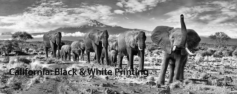 """<a href=""""https://www.incredibletravelphotos.com/2020-Workshops/2020-2-to-4-Days-Workshops/05-04-20-Black-and-White-Printing/"""">Click here to learn more...</a>"""