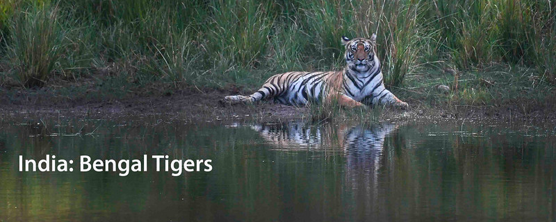 """<a href=""""https://www.incredibletravelphotos.com/2021-Workshops/2021-Travel-Workshops/04-05-21-Bengal-Tigers/"""">Click here to learn more...</a>"""