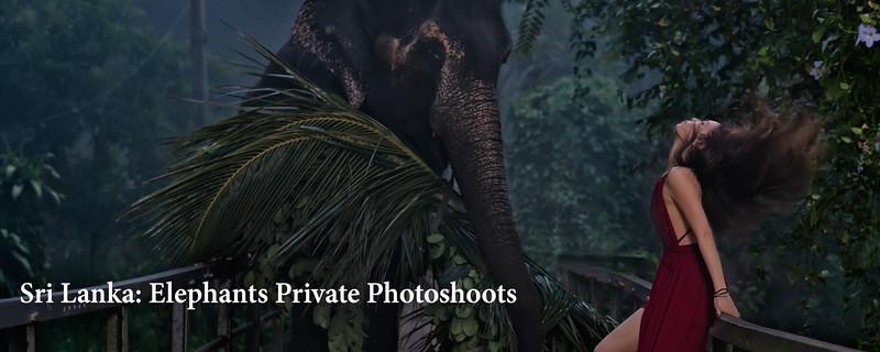 "<a href=""https://www.incredibletravelphotos.com/2019-Workshops/2019TravelWorkshops/2019-SriLanka-Elephant/"">Click here to learn more...</a>"