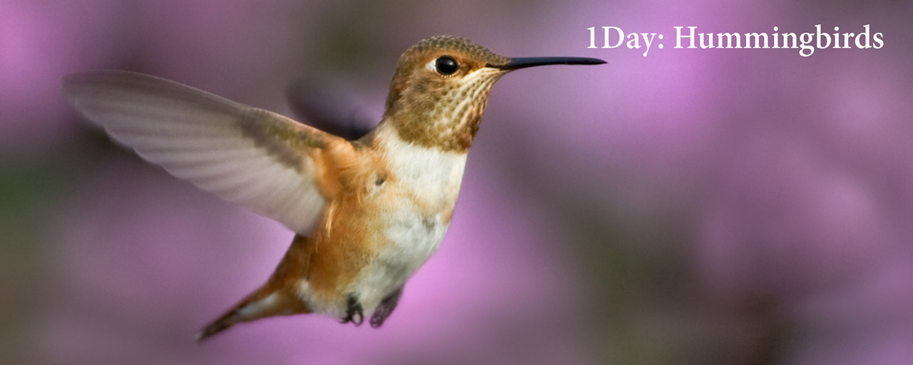 """<a href=""""http://www.incredibletravelphotos.com/2017-Workshops/2017-1-Day-Workshops/1DayHummingbirds/"""">Click here to learn more...</a>"""