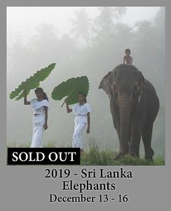 12-12-2019 SriLanka Elephant