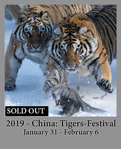01-31-2019 China: Tigers, Ice Festival
