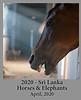 2020-04-01-HorsesElephants