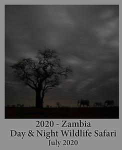 2020-07-14-ZambiaSafari
