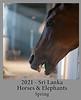 2021-04-01-HorsesElephants