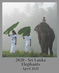 2020-04-20-SriLankaElephants