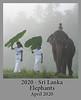 2020-04-20-SriLankaElephants