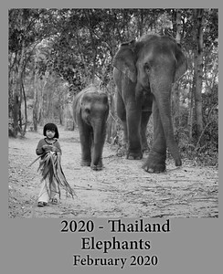 2020-02-14-ThailandElephant