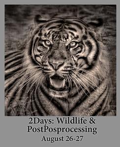 08-26-19 Wildlife-PostProcessing